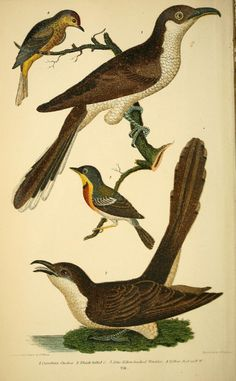 http://biodiversitylibrary.org/page/41424506#page/584/mode/thumb
