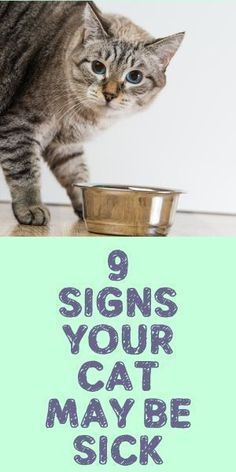 How often do you take your cat to the veterinarian? In observance of National Cat Health Month, we want to remind you that even if your cat does not appear to be sick, preventative care is important. Cat Care Tips, Pet Care, Pet Tips, Sick Cat Symptoms, Cat Health Care, Health Tips, Health Blogs, Kitten Care, Sick Kitten