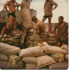 Defence Force, Ol Days, My Heritage, Good Ol, Military History, South Africa, Army, African, Middle East