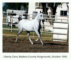 Arabian at Liberty. ©