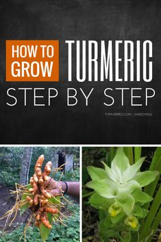 Let's see ten tips on how to grow your own turmeric! #Turmeric