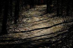Rachael Alexandra - Google+ - A walk in the woods..