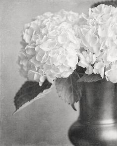 Black and White Photography, Hydrangea Print, Silver, Charcoal, Cream, Elegant Home Decor, Bathroom Decor, Bedroom Decor, Flower Print.