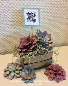 Succulent Garden Suite, Stampin' Up! - Enjoy the little things -