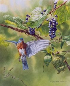 blue bird paintings  | Bluebird and Grapes - Painting - Nature Art by Arnold Nogy