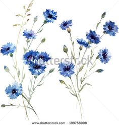 Sketched Flowers Stock Photos, Images, & Pictures | Shutterstock