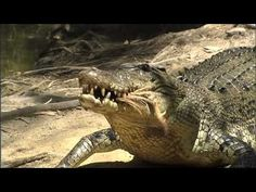 Different Animal Types - Covering Herbivores, Carnivores, Omnivores, Diurnal, Nocturnal