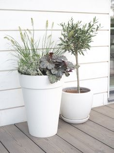 Flower Pots, Flowers, Outdoor Gardens, Planter Pots, Home And Garden, Yard Ideas, Blog, House, Container Plants
