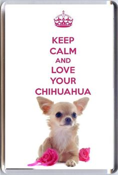 Some Helpful Ideas For Training Your Dog Cute Chihuahua, Teacup Chihuahua, Chihuahua Puppies, Chihuahuas, Deer Chihuahua, Chihuahua Quotes, Chihuahua Breeds, Dog Quotes, Dog Breeds