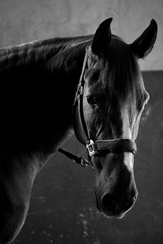 I love of horses, I'll never outgrow  The look, that look, the love..I miss them so!!