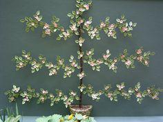 The Miniature Garden: Wall Plants