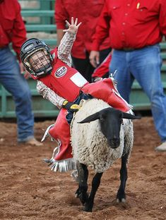 Mutton-busting is a rodeo event for children, in which kiddos don helmets and other protective gear (most of the time), and then see how long they can hold onto the back of a running sheep… Little Cowboy, Cowboy And Cowgirl, Little Boys, Cowgirls, Cute Kids, Cute Babies, Rodeo Time, Rodeo Cowboys, Bull Riding