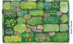 Kräuterbeet anlegen - Mein schöner Garten