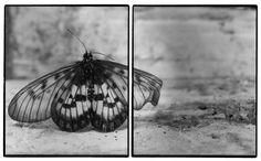 Dead butterfly - diptych - Joachim Froese [first pic full of pencils lined up, straight, second pic just the ends of pencils ] School Photography, Photography Projects, Artistic Photography, Art Photography, Butterfly Kisses, Butterflies, Still Life Photographers, Art Inspo, Contemporary Art