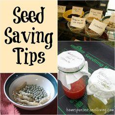 Seed Saving Tips - Homespun Seasonal Living