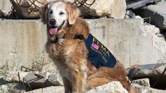 Last known 9/11 Ground Zero search dog still lends a helping paw