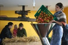 Juicing apples in the barn
