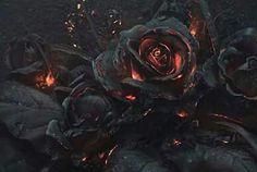 Fire black roses