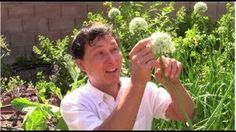 Learn Organic Gardening at GrowingYourGreens Permaculture, Better Life, Organic Gardening, Health Tips, Cancer, Veggies, Home And Garden, Landscape, 4 Life