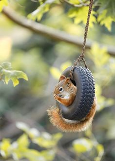 Items similar to Giggling Squirrel Photo - Nature Photography - Animal Wall Art - Funny Squirrel on Etsy Squirrel Art, Cute Squirrel, Baby Squirrel, Squirrels, Funny Squirrel Pictures, Cute Animal Pictures, Animal Photography, Nature Photography, Cute Little Animals