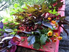 Colored pallet planters | Recyclart