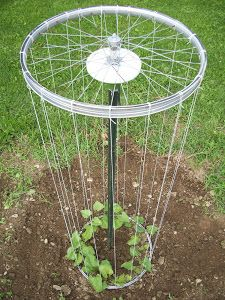A Bicycle Tire Trellis