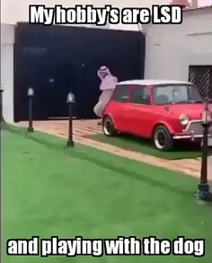 No so se ridere , avere paura per lui o entrambe le cose😅 dog funny dog funny funny aesthetic funny hilarious funny sleeping Funny Shit, Haha Funny, Funny Cute, Funny Jokes, Hilarious, Car Jokes, Crazy Funny Memes, Funny Stuff, Funny Video Memes