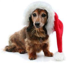 Animals Today December 9, 2012: Frank Hoffman | Animals Today Radio