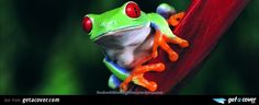 A stunning Tree frog facebook cover for your FB timeline. Choose from thousands of new Animals timeline covers with live preview.