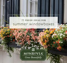 Summer window box season is back! Here are 15 ideas to unleash your inner painterly self.