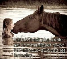 Citation équestre | Citation | Pinterest