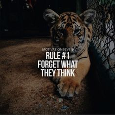 Rule No1 : FORGET WHAT THEY THINK!  #quote #zitat #motivation Tiger Quotes, Hug Quotes, Lion Quotes, Attitude Quotes, Wisdom Quotes, Words Quotes, Sayings, Qoutes, Reality Quotes
