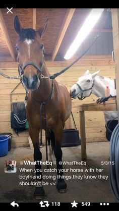 When you catch your horse with her boyfriend...