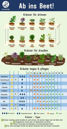 garten beet Ab ins Beet! Home Vegetable Garden, Herb Garden, Garden Plants, Home And Garden, Garden Stakes, Ab Ins Beet, Herbs Indoors, Growing Herbs, Plantation