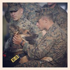 Happy Veterans Day!!  I used to work with Marines and see them with these wonderful Military Working Dogs! They are incredible creatures! Both the Marines and the MWD's! And that's from an Army Disabled Vet to all of our selfless heroes in the military! God Bless You All!