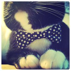 Bow tie for Mr. Whiskers! He needs it too!