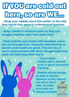 Know how to keep outdoor rabbits happy, healthy and safe throughout winter