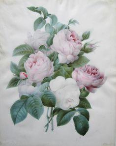 Aquarelle de fleurs (roses) , Ecole de Pierre-Joseph Redouté (1759 -1840)
