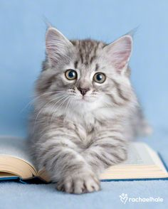 """Wedging itself between face and book,  the cat's expression seems to say, 'You really didn't really want to read that did you?'"" --Author Unknown"