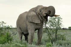 Cameroon increases elephant protection after mass slaughter