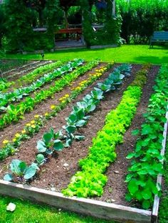 a traditional vegetable garden layout raised bed vegetable gardening lets look at some of the issues with raised beds in vegetable gardening