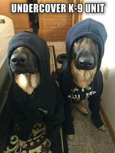 OMG K-9! Canine!