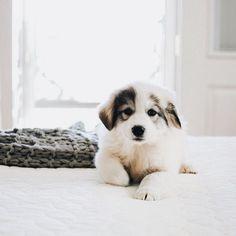 OMG this puppy is sooooooooo cute! Puppies And Kitties, Cute Puppies, Cute Dogs, Doggies, Animals And Pets, Baby Animals, Cute Animals, Savage, Cute Creatures