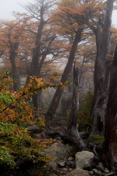 Wild forest, Chile