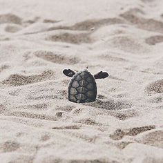 Looks about right… #Monday #vibes #babyturtle #cuteturtle #cute #onthebeach #sand #mondaymood #mondayvibes #sea #turtlegram