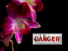 5 warning signs that your Orchid is in trouble. Caring for Orchids