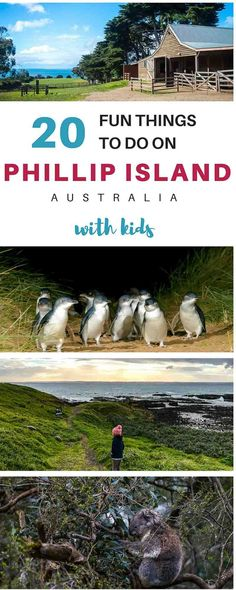 Phillip Island Attractions for Families: things to do in Phillip Island, getting from Melbourne to Phillip Island & the best family Phillip Island hotels.