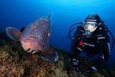 """Mero And Me"" (Atlantic goliath grouper) @ Azores - Portugal"