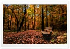 Beautiful Autumn HD Wide Wallpaper for Widescreen