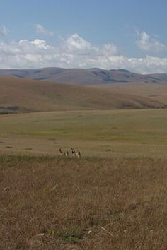 Afromontane grassland of the Nyika Plateau, Malawi